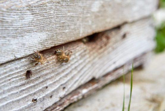 Penrhos Bee Hives